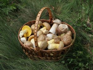 Mushrooms and Gout